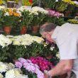 manoel-aumentou-o-estoque-de-sua-floricultura-para-atender-consumidores