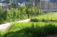 alem-do-lixo-mato-alto-tambem-incomoda-moradores-do-entorno-fotos-richard-carvalho