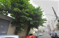 segundo-morador-galhos-estao-escurecendo-trechos-da-rua-do-bairro-sao-mateus-foto-marcelo-ribeiro